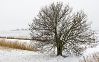Lonesome tree in the snowy nature wallpaper 2560x1600 jpg