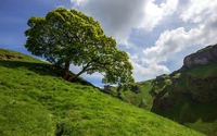 Lonesome tree on the hill wallpaper 1920x1200 jpg