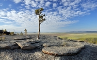 Lonesome tree rising to the sky from the rocky hill wallpaper 2560x1600 jpg