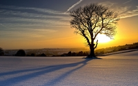Lonesome tree shadowing on the snow wallpaper 1920x1200 jpg