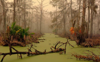 Louisiana swamp wallpaper 1920x1200 jpg