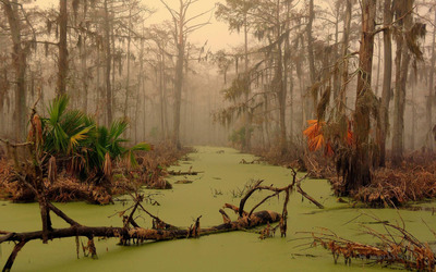 Louisiana swamp wallpaper