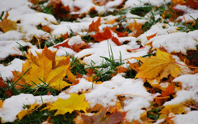 Melting snow on fallen leaves wallpaper
