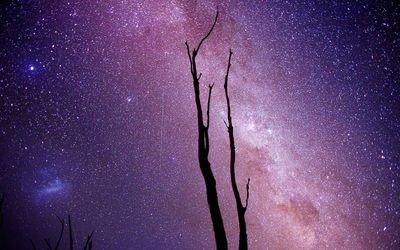 Milky Way above the trees wallpaper