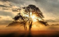 Misty sunrise behind the tree wallpaper 1920x1200 jpg