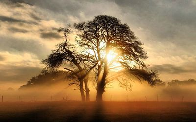 Misty sunrise behind the tree wallpaper