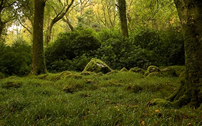 Mossy forest [2] wallpaper