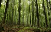 Mossy forest wallpaper 2560x1600 jpg