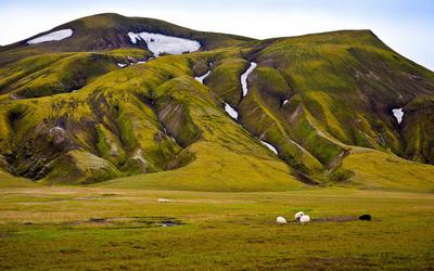 Mossy hills wallpaper