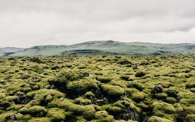 Mossy lava field wallpaper