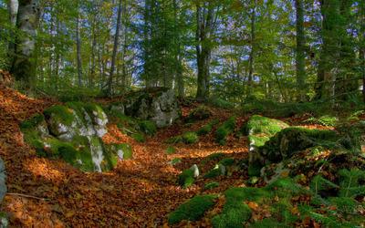 Mossy rock between autumn leaves wallpaper