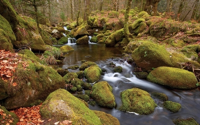 Mossy rocks in the forest river wallpaper