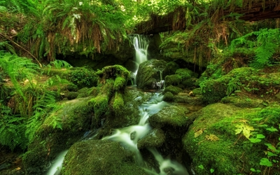 Mossy rocks in the river wallpaper