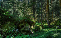 Mossy rocks in the woods wallpaper 2560x1600 jpg