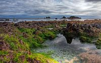 Mossy rocks on the coast wallpaper 2560x1600 jpg