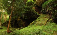Mossy stairs to the rock wallpaper 2560x1600 jpg
