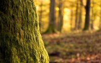 Mossy tree wallpaper 2560x1600 jpg