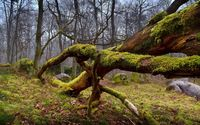 Mossy tree logs wallpaper 2560x1600 jpg