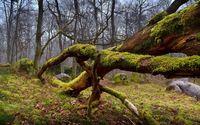 Mossy tree logs wallpaper 2560x1600 jpg