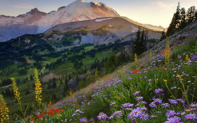 Mount Rainier National Park wallpaper