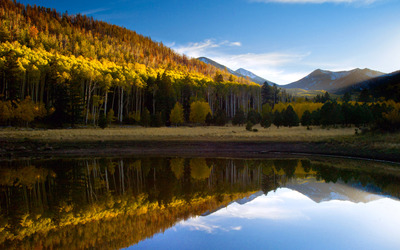 Mountain forest reflecting in the lake wallpaper