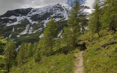 Mountain path towards the snowy peaks wallpaper