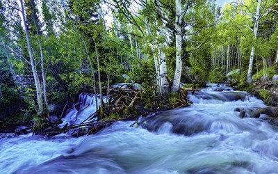Mountain river in the forest wallpaper