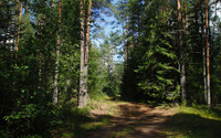 Muddy path through the green forest wallpaper 1920x1080 jpg
