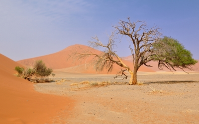 Namib Desert wallpaper