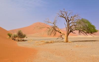 Namib Desert Wallpaper