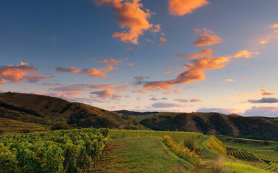 Orange clouds above the vineyard wallpaper