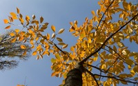 Orange leaves on the tall tree wallpaper 2880x1800 jpg