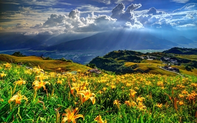 Orange lilies on a hill enjoying the sun light wallpaper