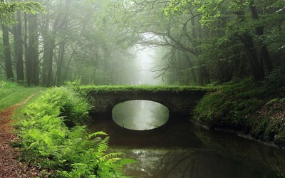 Overgrown bridge in the foggy woods wallpaper