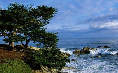Pacific Grove Coastline wallpaper