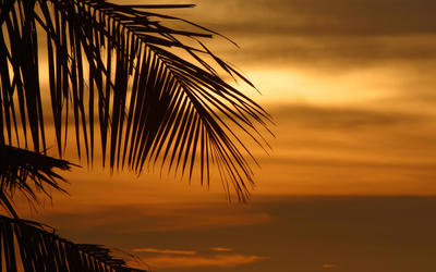 Palm shadow at sunset wallpaper