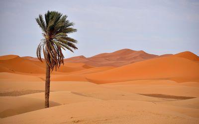 Palm tree in desert Wallpaper