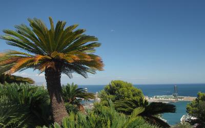 Palm tree on the ocean shore wallpaper
