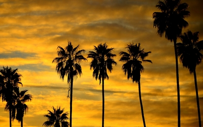 Palm tree silhouette at sunset Wallpaper