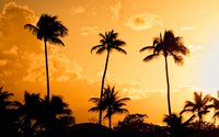 Palm trees at sunset [2] wallpaper 1920x1200 jpg