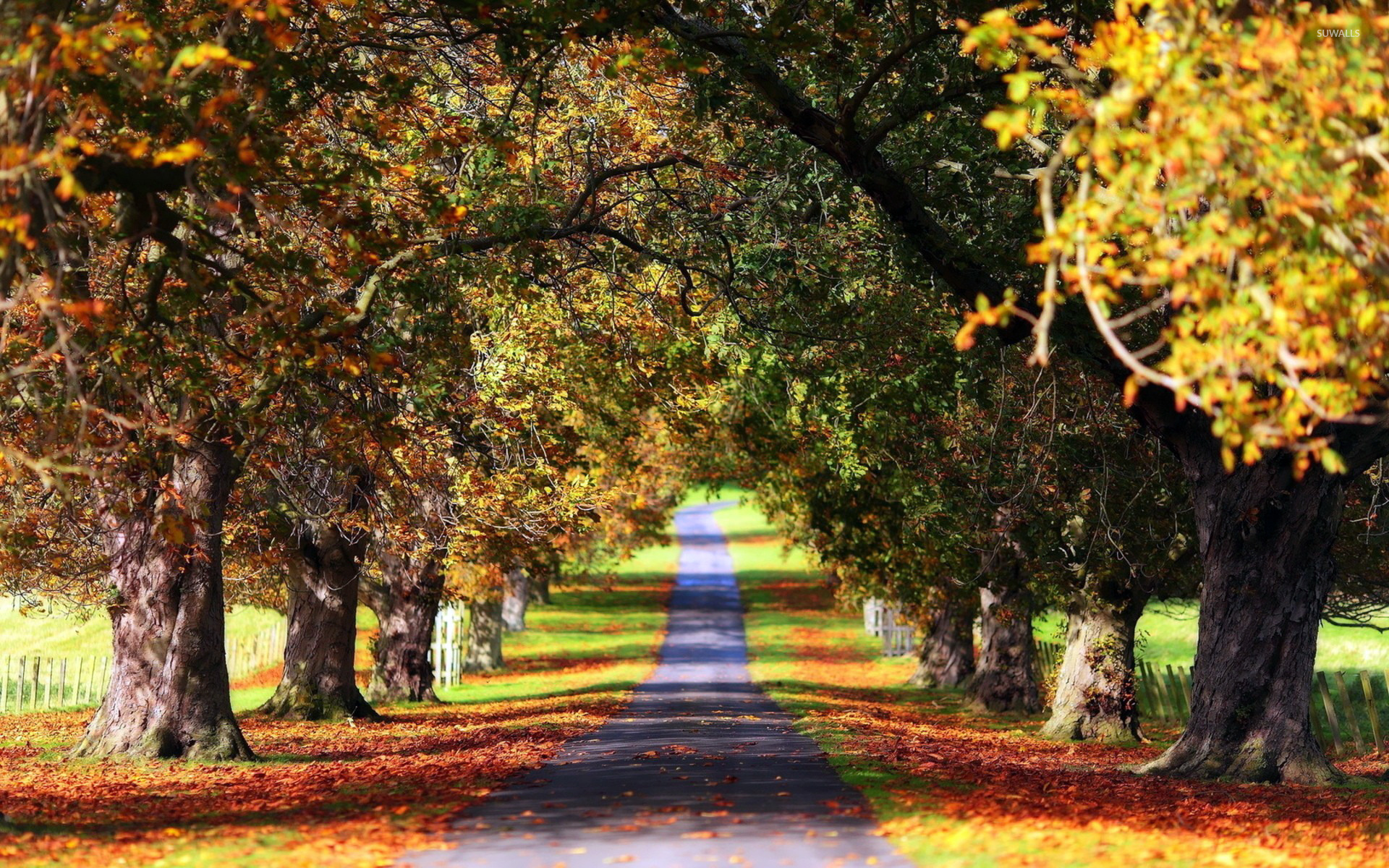Path Between The Trees Wallpaper Nature Wallpapers 15630