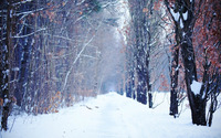 Path between the trees [2] wallpaper 1920x1080 jpg