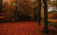 Path in autumn forest wallpaper 2560x1600 jpg