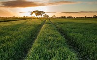 Path in the grass wallpaper 1920x1080 jpg