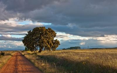 Path on an autumn field wallpaper