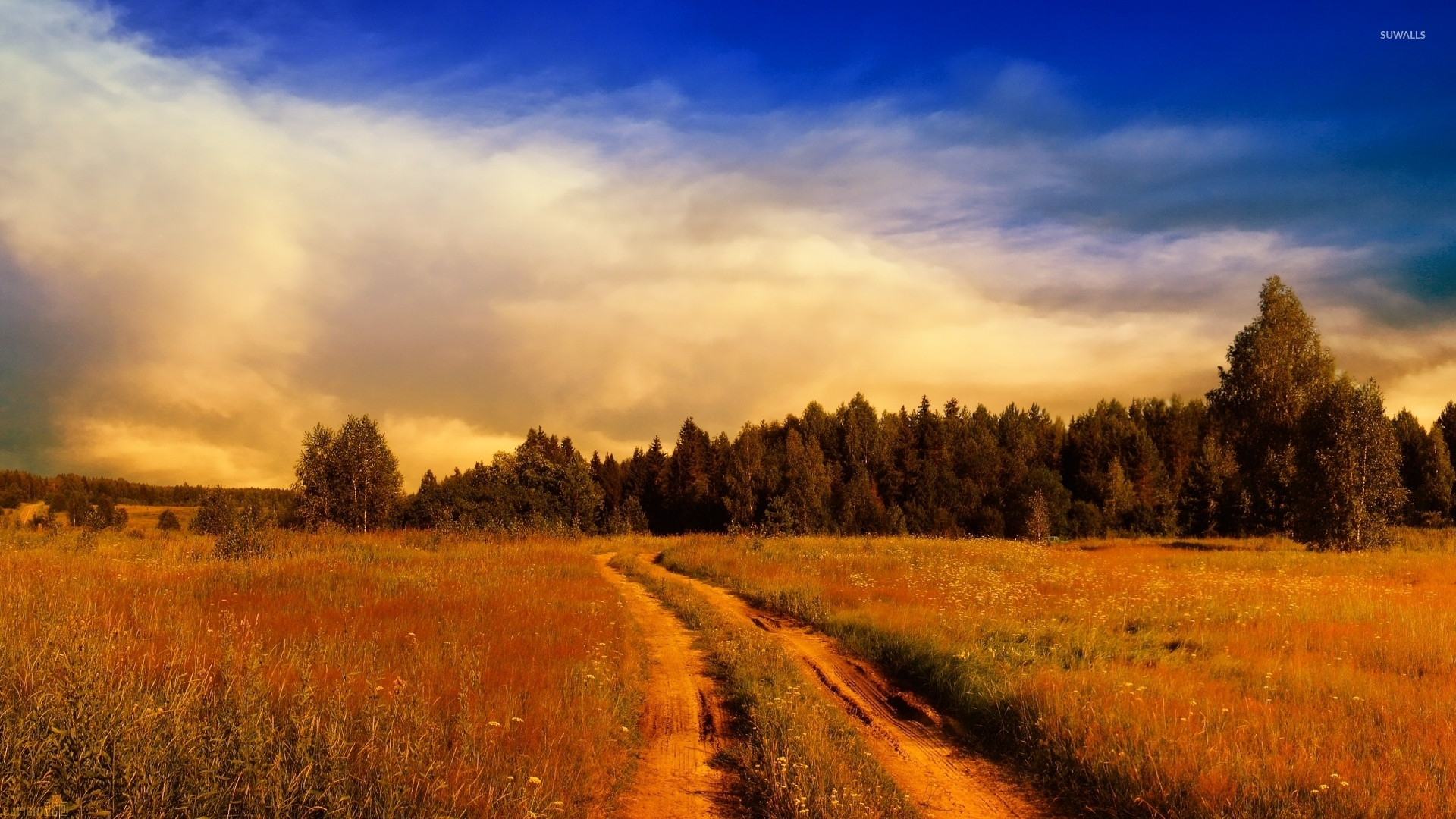 1920x1080 Wallpaper: Path On The Rusty Field Towards The Forest Wallpaper