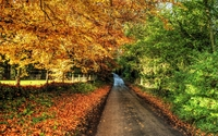 Path through autumn nature wallpaper 1920x1200 jpg