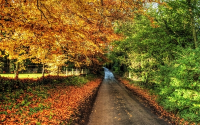 Path through autumn nature wallpaper