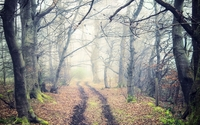 Path through foggy trees wallpaper 1920x1200 jpg