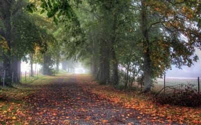 Path through misty park wallpaper